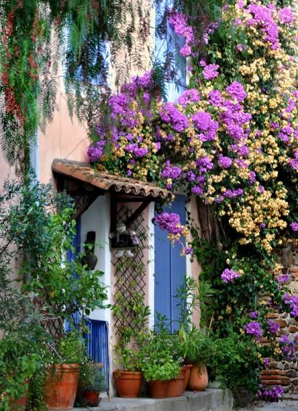 Растения, как часть декора фасада