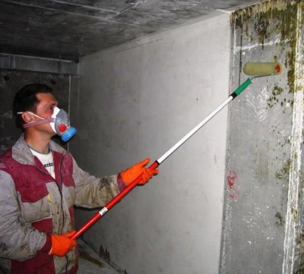 Процесс обработки пораженных плесенью стен
