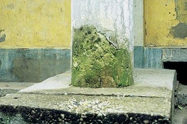 Микроорганизмы способны разрушить даже бетон