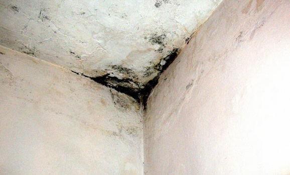 Пораженные плесенью потолок и стены