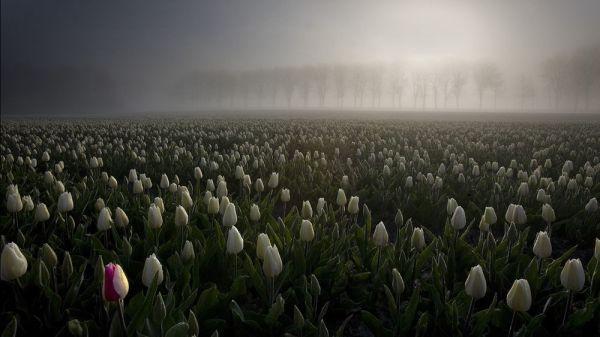 Мрачный принт с тюльпанами