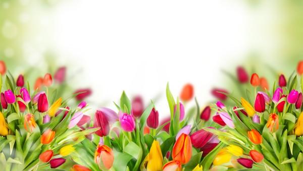 Один цветок и такая разная гамма оттенков