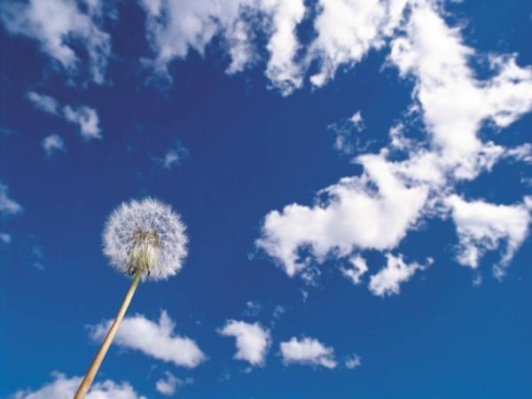Цветок на фоне облачного неба