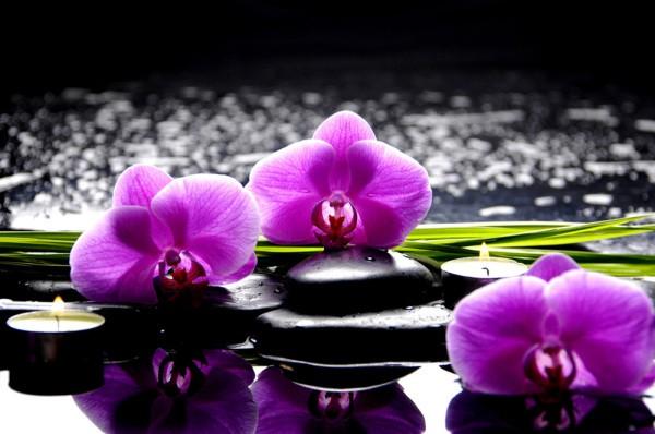 Фотообои орхидеи среди камней на воде