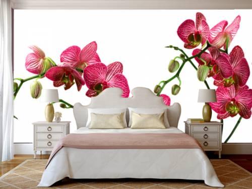 Яркая орхидея в интерьере светлой спальни