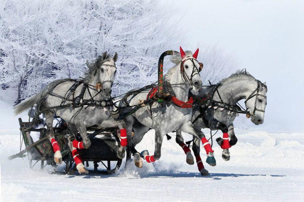 Тройка лошадей, запряжённая в сани