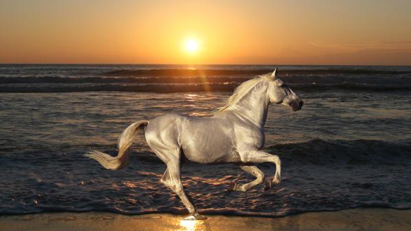 Лошадь на фоне моря и заходящего солнца