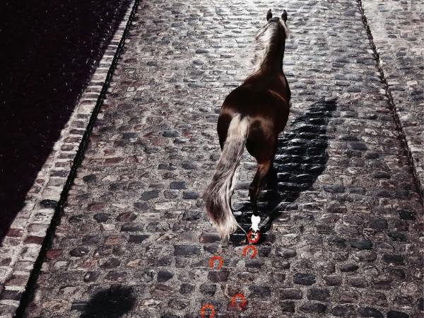 Одинокая лошадь на булыжноймостовой города