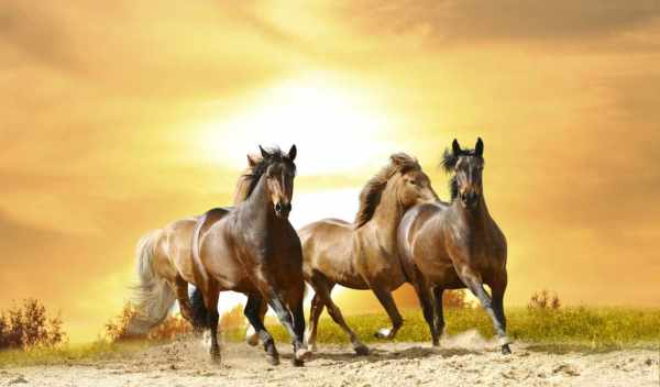 Скачущие лошади на фоне заходящего солнца