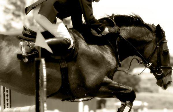 Жокей на лошади в чёрно-белой цветовой гамме