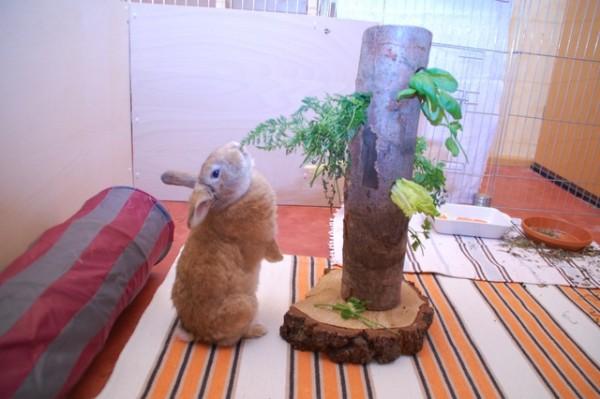 Аксессуары для занятий кроликов