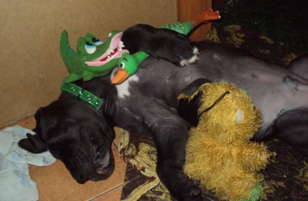 Любимые игрушки для собаки