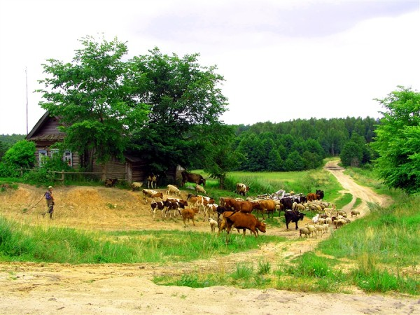 На фото, фотообои с изображением деревенской жизни