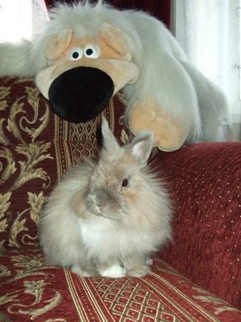 Сравнение кролика и игрушки