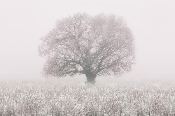 Атмосферный рисунок в чёрно-белом цвете