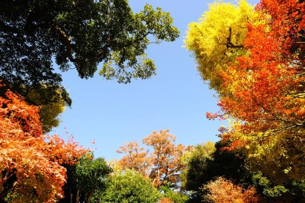 Кроны деревьев, переливающиеся всеми цветами радуги