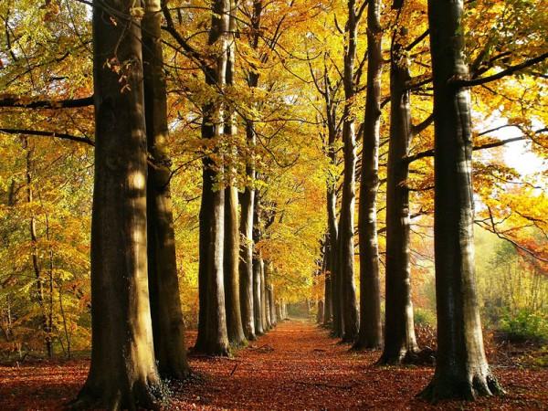 Непередаваемый романтизм осеннего леса