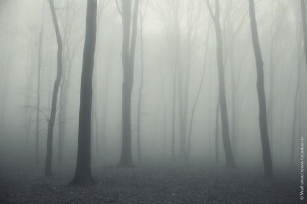 Ночной лес со специфической атмосферой