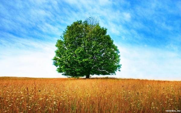 Одинокое дерево, посреди бескрайнего поля