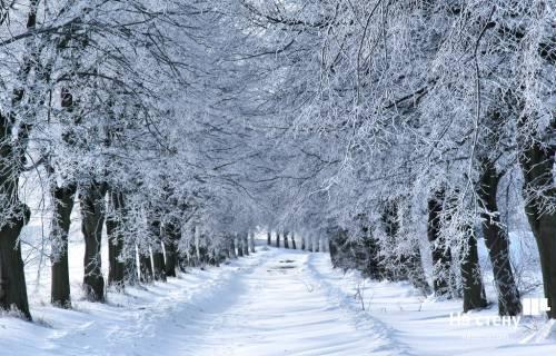 Зимний лес со своими неповторимыми пейзажами