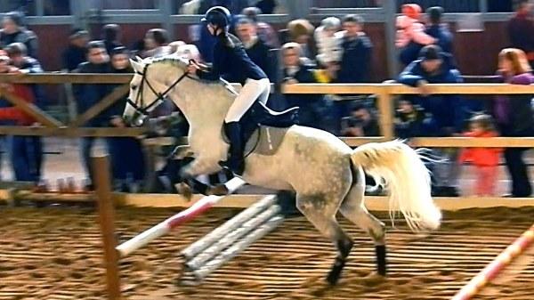 Фотообои с изображением конного спорта впишутся в любой интерьер