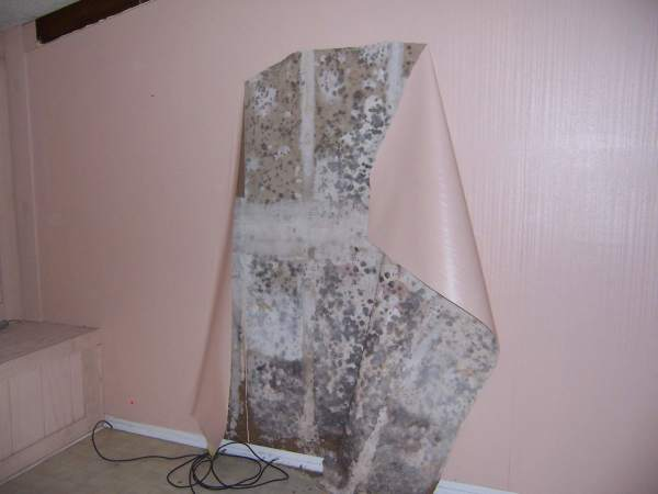 Клея гипсокартонные листы на стены, соприкасаемые с улицей, со временем вы можете столкнуться с такими проблемами, как грибок или плесень