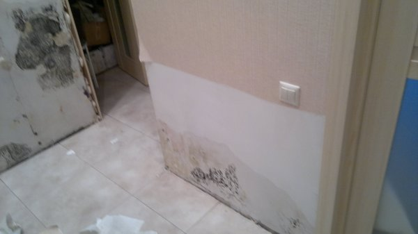 Обработка специальными составами стен перед монтажом гипсокартона необходима, чтобы в дальнейшем не беспокоиться о появлении на стенах плесени или грибка