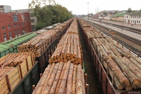 Необработанную древесину поставляют на экспорт