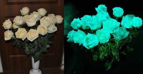 Цветы при свете и в темноте