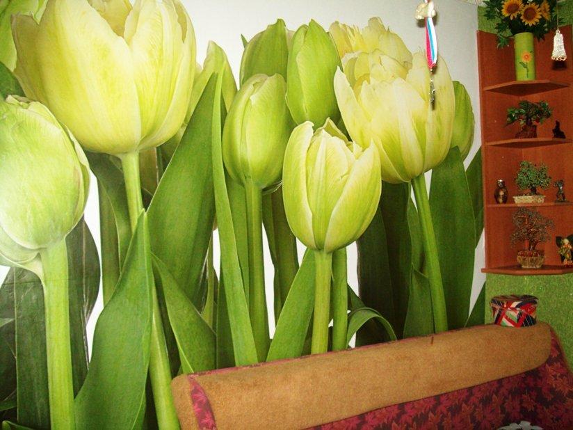 фотообои тюльпаны зеленые на кухне для фруктов арбуза