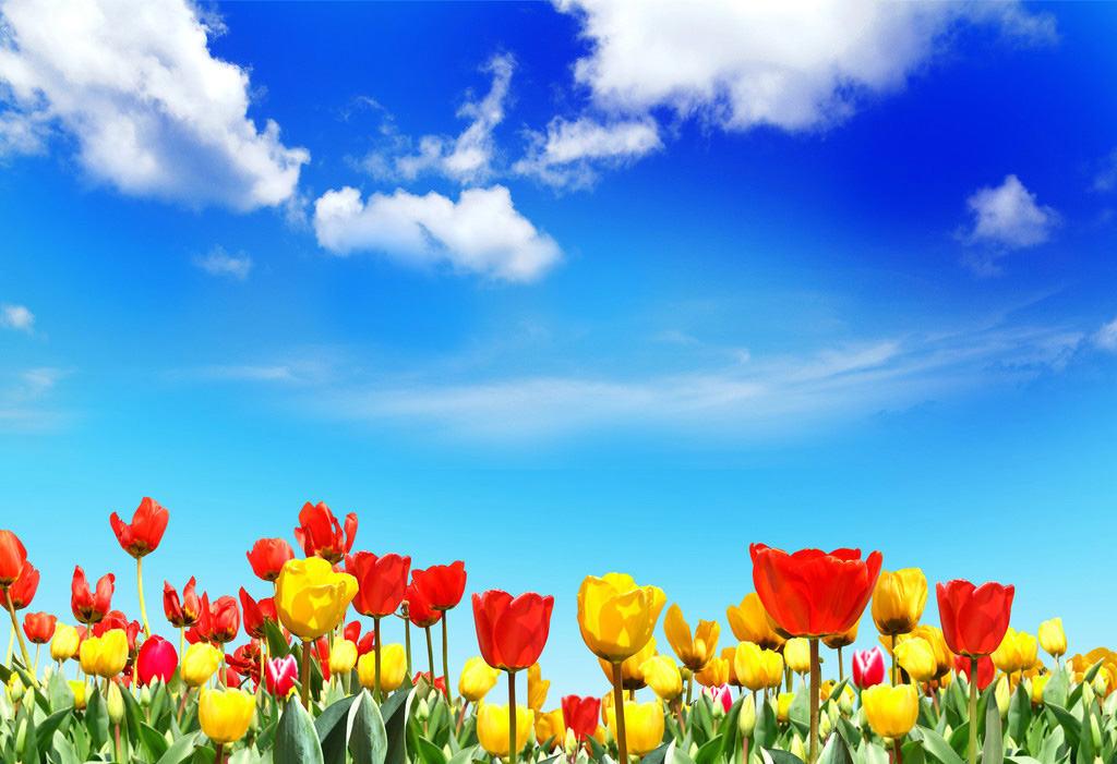 Картинка небо и тюльпаны